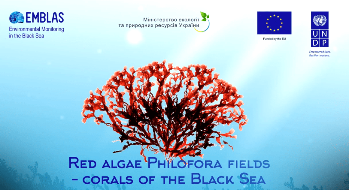 "Phyllophora field – ""Corals of the Black Sea"""