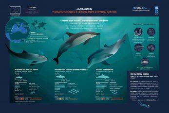 1.Дельфины