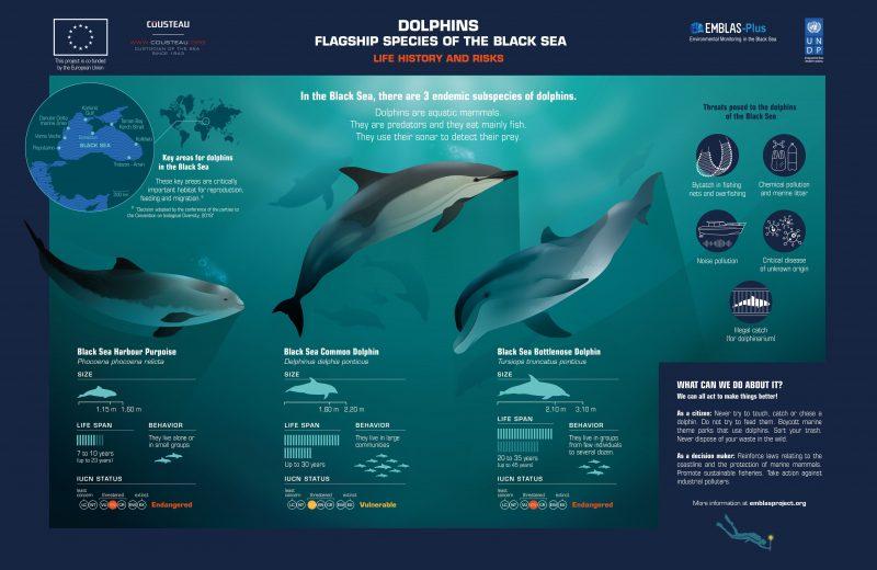 1.Dolphins
