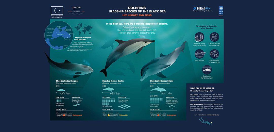 1.Dolphins-slider