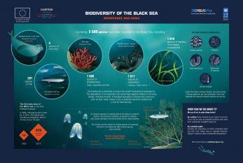 2.Biodiversity