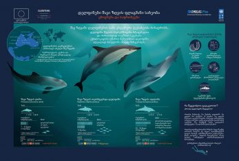 Georgian.-Dolphins-flagship-species-of-the-Black-Sea_page-0001